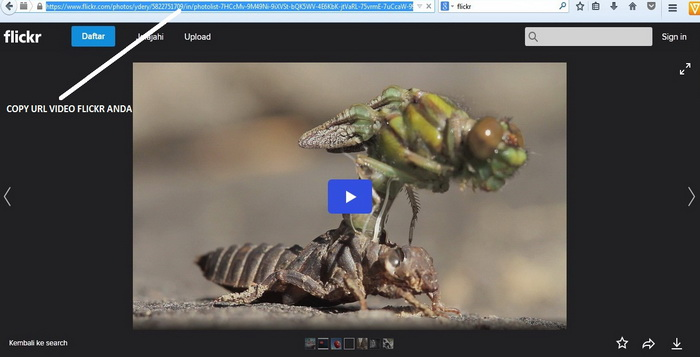 cara-download-video-dari-flickr-tanpa-software-a